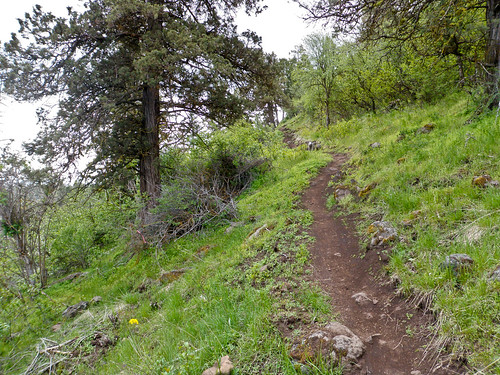 Klamath Ridgeview Trail -  Klamath Falls Mountain Bike Trails | by ex_magician