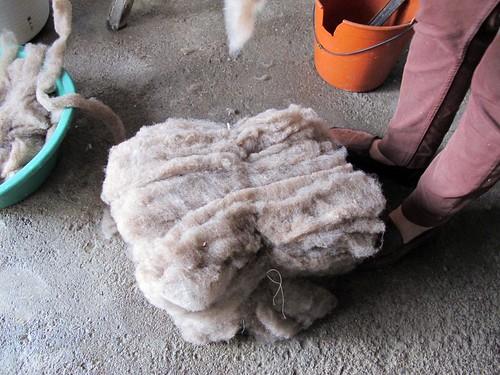 pastas de lã | by Rosa Pomar