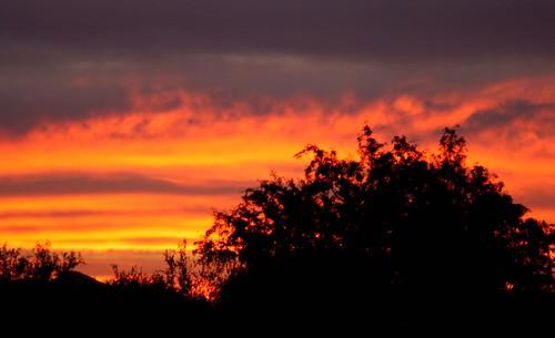 trees sunset arizona silhouette three points