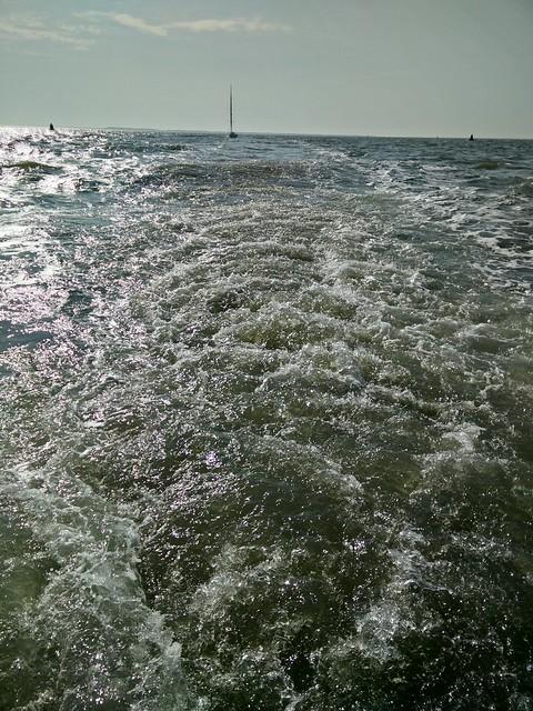 Zeevissen 2015 (AVG)