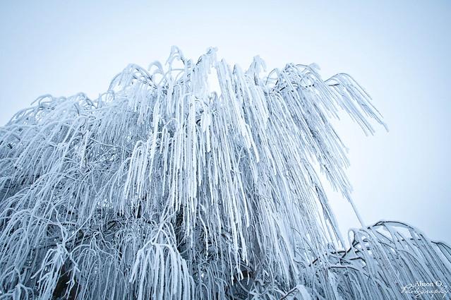Frozen Angers - 31 décembre 2016