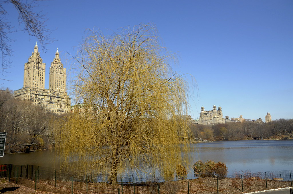 Central Park in early spring, New York