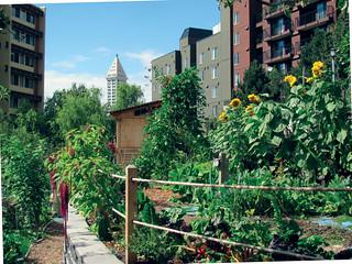 Urban Garden | by Seattle Parks & Recreation