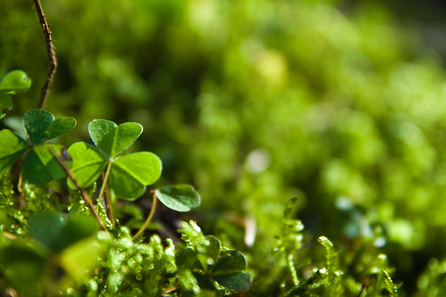 Shamrock | by @ANDYwithCAMERA
