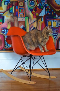 Flickr The Cats Love Eames Pool