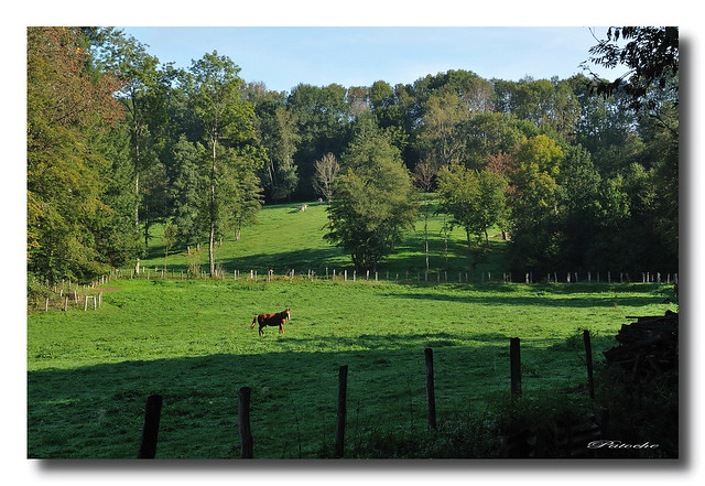 Espace rural / Rural areas