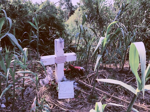 murder photostream brazosriver fortbendcounty stevencarrington coreybrooks stevencarringtonorchardtexas teketriabuggs