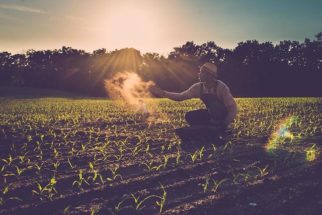 Stop Monsanto GMO's! We are seeding Orginals!!
