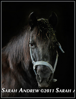 Black on Black | by Rock and Racehorses