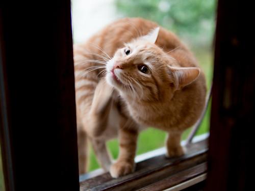 Cat scratches itself