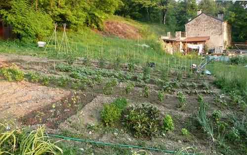l'orto all'inizio di luglio | by cristina.sanvito