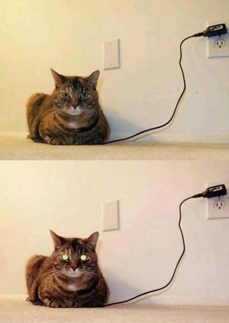 Internet Sensation Cat aka our Pixie.