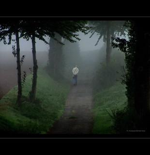 Seltsam im Nebel...  -  In the Mist | by h.koppdelaney