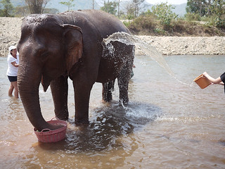 Elephant Nature Park Chiang Mai-20 | by shalai6