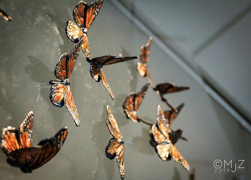 brass butterflies | by MjZ Photography