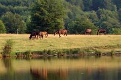 коне от био ферма Чемерник