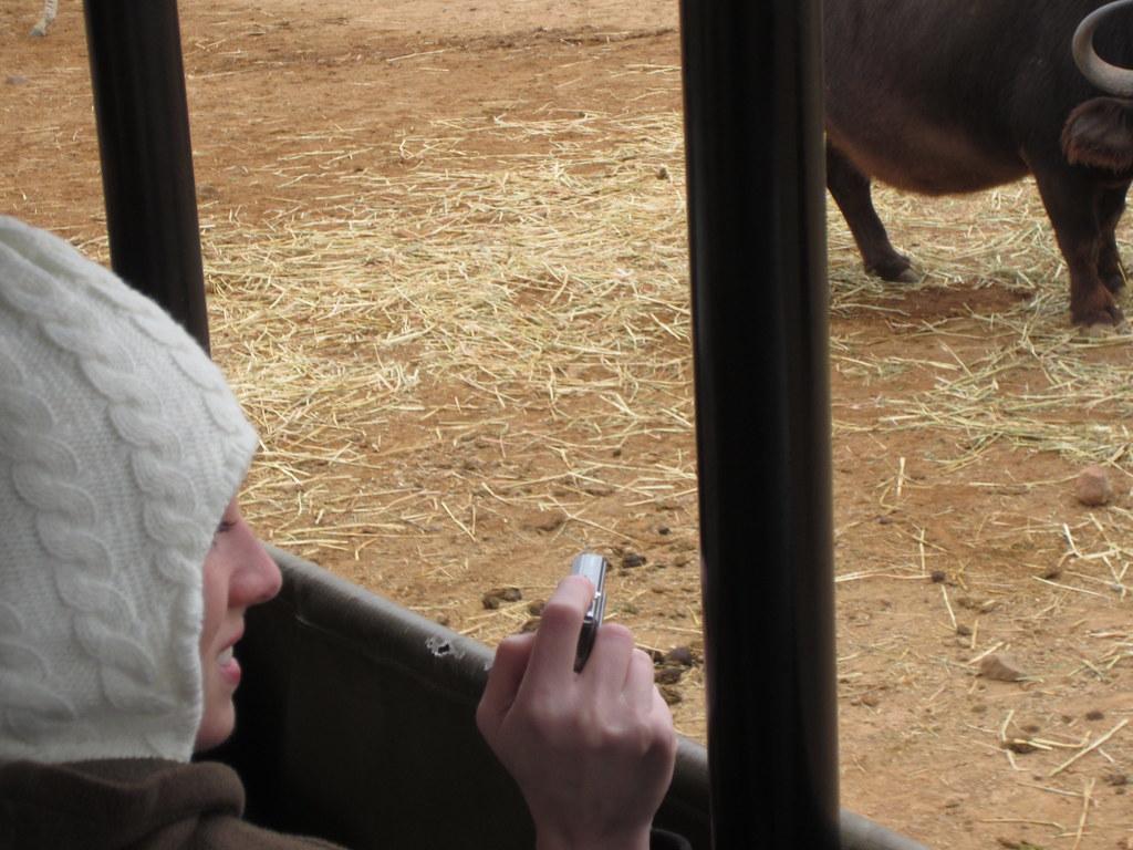 slot game safari