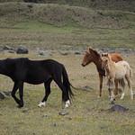 Sa, 13.06.15 - 13:05 - Parque Nacional Cotopaxi