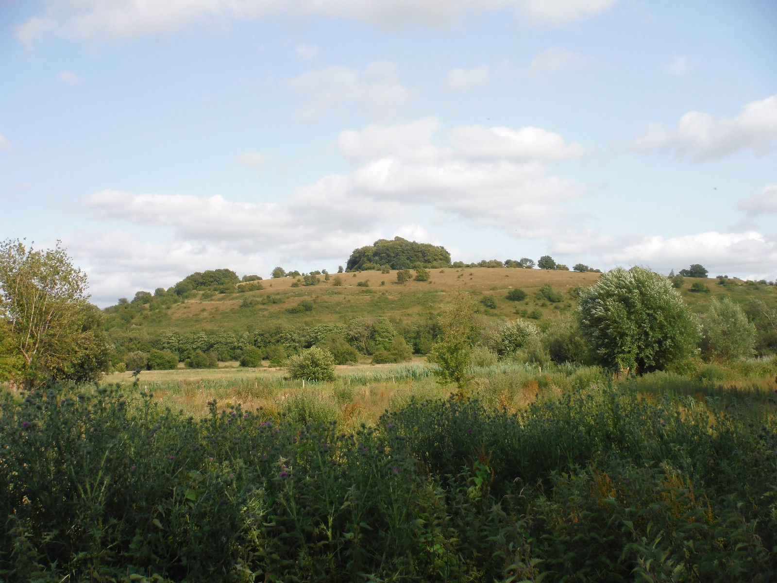 St. Catherine's Hill from the Watermeadows SWC Walk 15 : Winchester Circular
