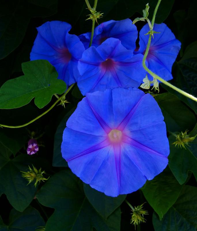 Blooms....