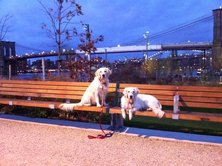 Frisket & Sailor take in the sunset view | by epc