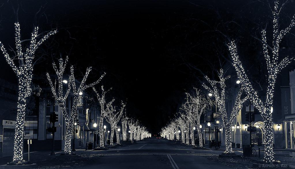 University Avenue Tree Lights Are >> University Avenue Trees Along University Avenue In Downtow Flickr