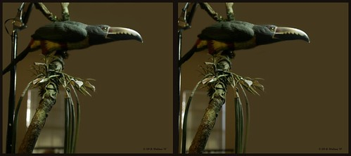 sculpture detail bird art nature stereoscopic stereogram 3d crosseye md gallery brian fine maryland carving indoors stereo exotic tropical wallace inside stereopair sidebyside depth easton stereoscopy stereographic ewf freeview brianwallace xview stereoimage xeye stereopicture crosssview