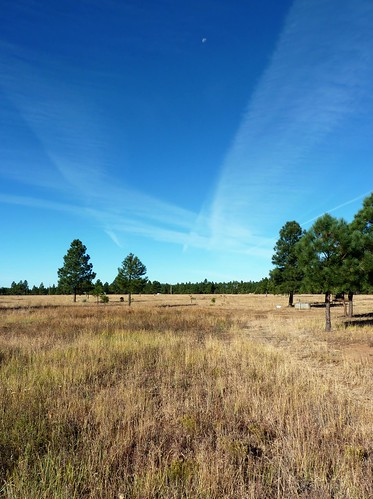 blue trees arizona sky nature beautiful field grass weather yellow pine rural season landscape outside golden day view outdoor space empty horizon country scenic meadow dry nobody fresh pasture pinetop range plain tranquil coutryside