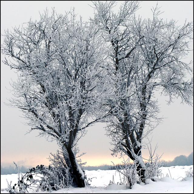 neige .......