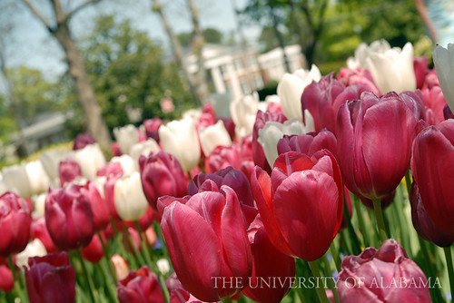 The Campus in Spring