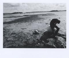 pellicola022