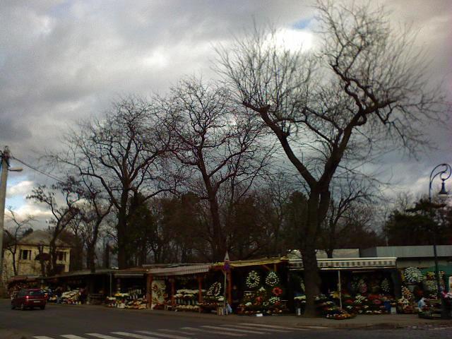 Fák az Új Köztemető előtti virágárudák felett egy november végi borús délután