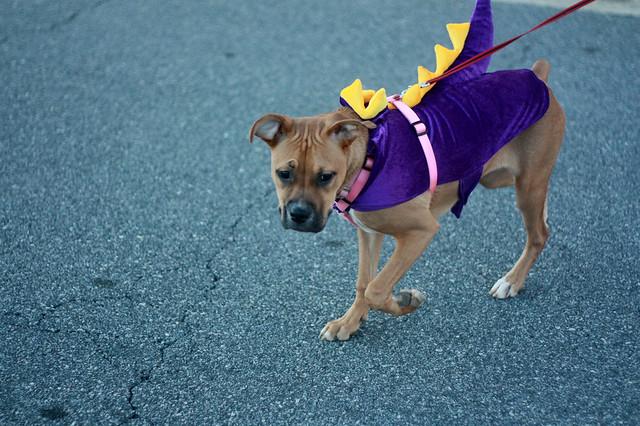 002/365 - Dragon Puppy