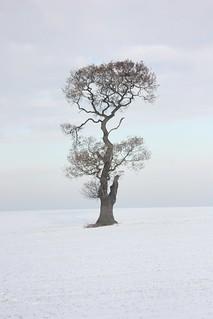 Ria's tree in snow!