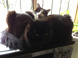 Pema and Nigel on microwave   by Silver Hills Manor
