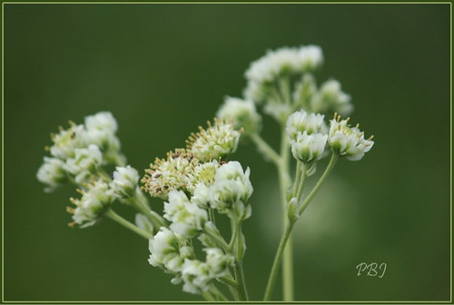 flowers flower green grass canon sparkle canont1i