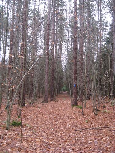 Stick season | by lamanyana