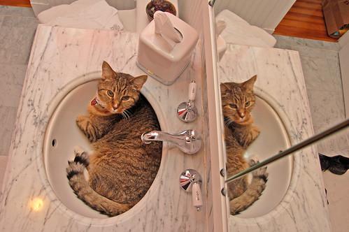 Reflected Feline