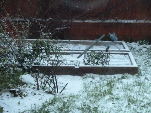 square foot garden in the snow
