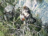 Opice v kaldeře Rinjani, foto: Petr Nejedlý