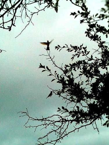 """My Favorite Birds"" by Heather McCready   by Heather McCready"