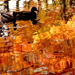 Autumn Fowls:京都秋天