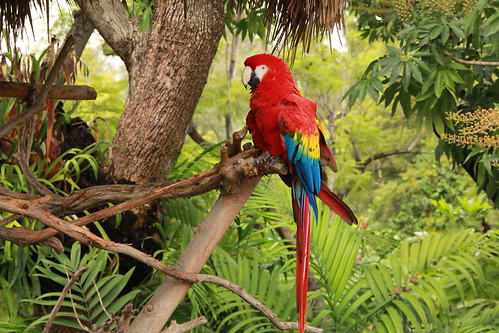 Tropical Rainforest Parrot | by Jaime Olmo