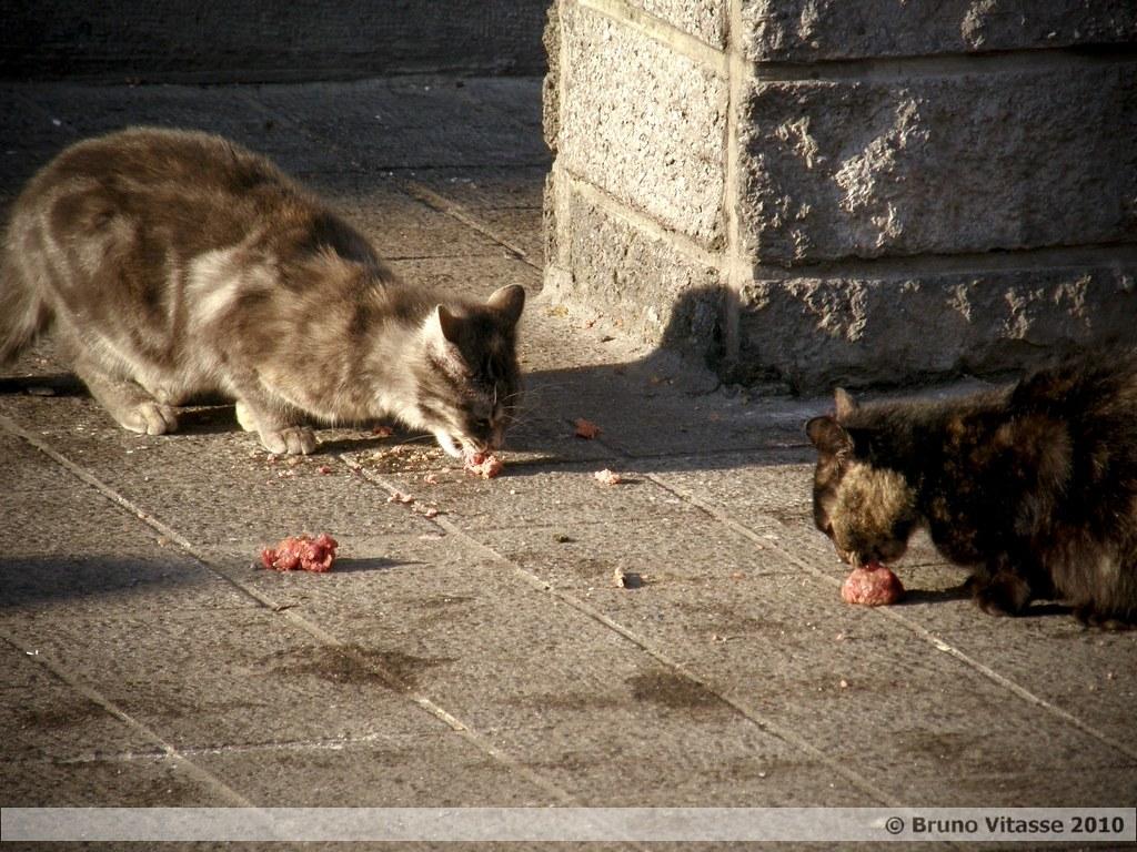 Urban Bruxels #09 (Les Marolles du mythe à la réalité)