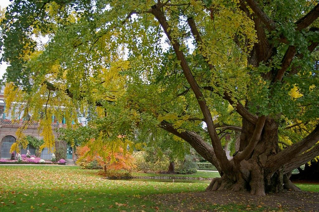 Jardin Botanique De Tours Daniel Jolivet Flickr