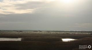 Farlington Marsh   by Hexagoneye Photography