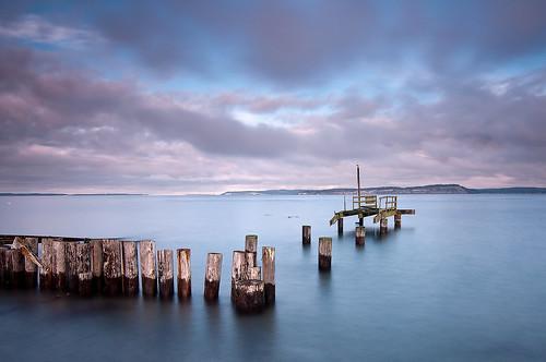 sea bird water pier washington decay seagull ruin lookout pugetsound piling vigil sentinel hansville pointnopoint