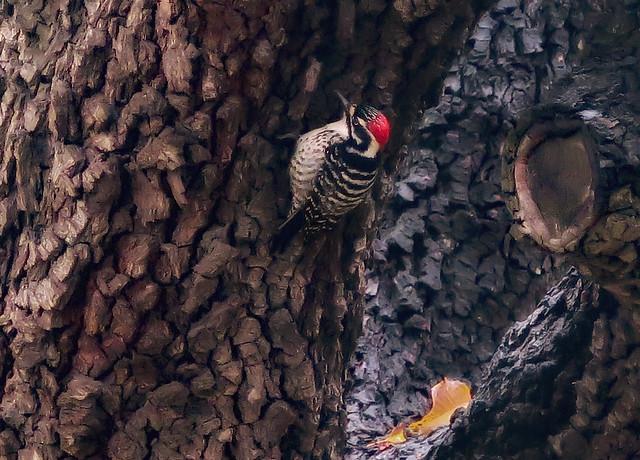 Pecking Wood