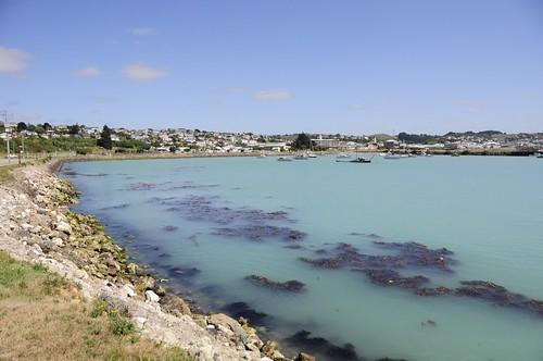 new blue sea newzealand turquoise zealand nz otago aotearoa oamaru shah saumil saumilshah