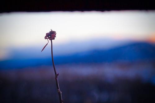 winter mountain cold window rose sunrise fence petal vista thorn mesa mttaylor